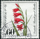 Postage stamp printed in Germany (West Berlin), shows a flowering Gladiolus palustris — Stock Photo