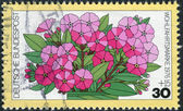Postage stamp printed in Germany, shows a flowering Phlox paniculata — Stock Photo