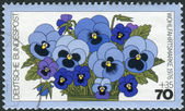 Postage stamp printed in Germany, shows a flowering Viola tricolor — Stock Photo