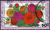 Postage stamp printed in Germany, shows a flowering of Zinnia elegans — Stock Photo
