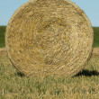 Stock Photo: Round bale of hay in the field