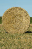 Round bale of hay in the field — Stock Photo