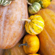 Gourds — Stock Photo #14388081
