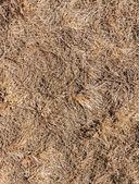 Dry grass. — Stock Photo