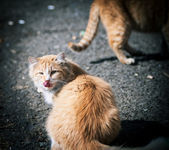 Stray cats. — Stock Photo