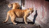 Stray cats. — Stock fotografie