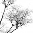 Stock Photo: Tree branches.