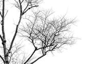 Tree branches. — Stock Photo