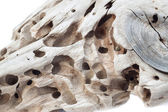 Wood with termite holes. — Stock Photo