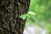 Single green leaf on tree. — Stock Photo