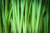 Green grass, background. — Stock Photo