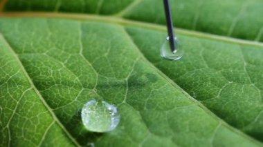 капли воды, капает на лист. — Стоковое видео