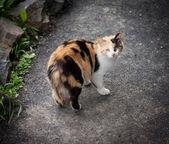 Stray cat. — Stock Photo