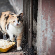Stock Photo: Stray cat.