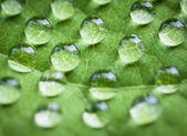 Damla su yaprak yeşil. — Stok fotoğraf