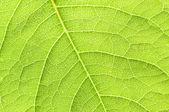 Folha verde. — Foto Stock