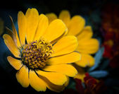Yellow flower. — Stock Photo
