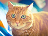 Lovely red cat. — Stock fotografie