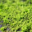 Green moss. — Stock Photo