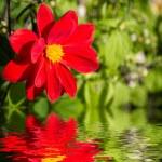 Cosmos flower. — Stock Photo #32790059