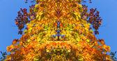 Maple leafs. — Stock Photo