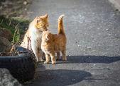 Stray cats. — Stock Photo