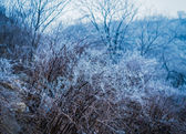 Frozen tree branches. — Stock Photo