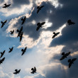 Pigeons against sky. — Stock Photo #44518145