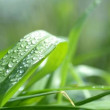 Grass with water drops. — Stock Video #46991475