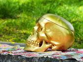 череп — Стоковое фото