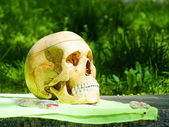 A skull of human — Stock Photo