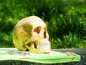 Un cráneo humano — Foto de Stock