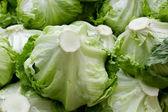 Piles of iceberg lettuce — Stock Photo