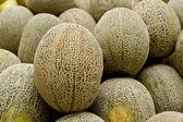 Rock melon or Cantaloupe — Stock Photo