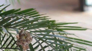 Video of Humming bird hatching her egg — Stock Video