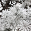 Frost leaves, frozen leaves - Foto Stock