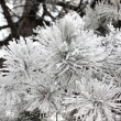 Frost leaves, frozen leaves - Stock Photo