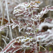 Frost leaves, frozen leaves — Stock fotografie