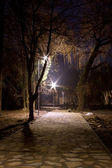 Trees in the park at night — Stock Photo