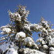 Winter scene — Stock Photo #12220130
