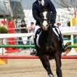 Stock Photo: Equestrijumping - training