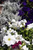 Background of beautiful flowers — Stock Photo