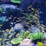 Fish in sea — Stock Photo