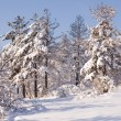 Winter scene — Stock Photo #13392685