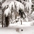 Winter scene — Stock Photo #13392830