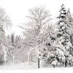 Winter scene — Stock Photo #13394695