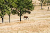 Young horse eating grass — Stock Photo