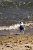 Seagull sitting on the beach — Stock Photo
