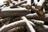 Pile of wood covered by snow — Stock Photo