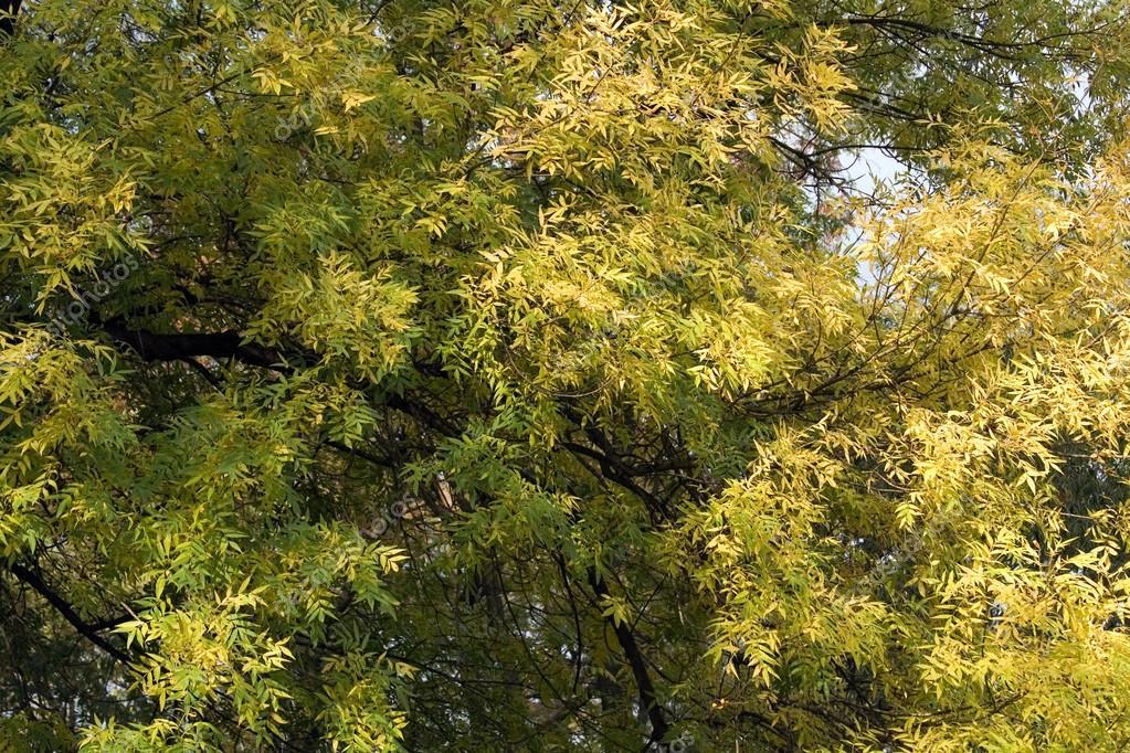 秋天落叶树简笔画